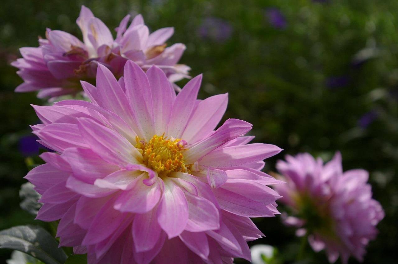 Flower HIBIYA