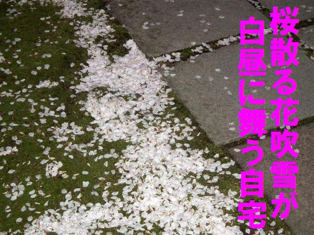 2014桜 (2)