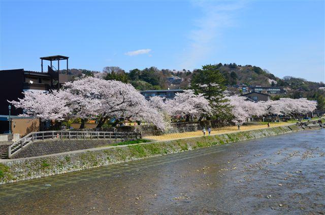 2014桜 (4)