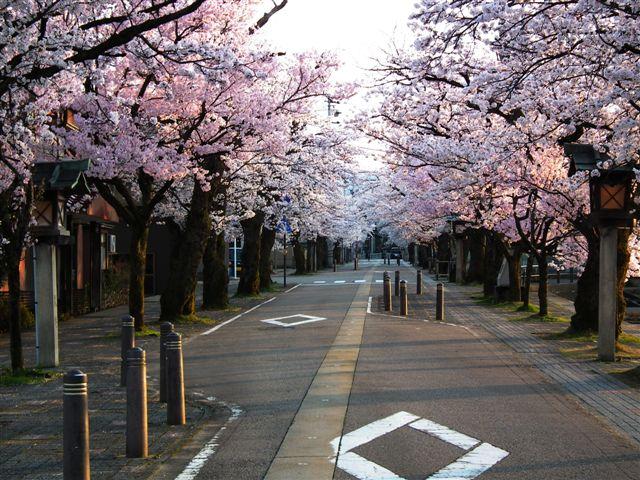 2014桜 (6)