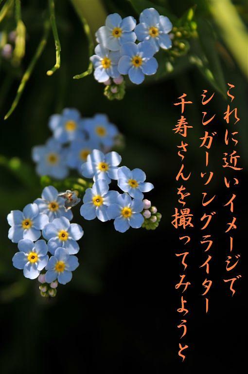 全国植樹祭 (31)
