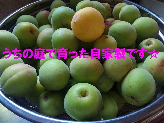 ウメッシュ♪ (1)