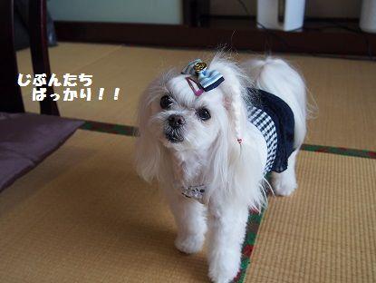 天草Ⅲ10