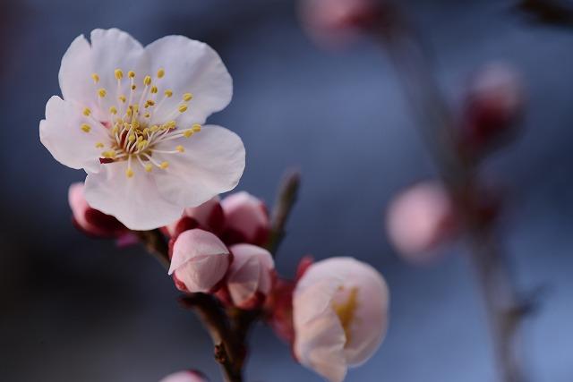 わが家の花1