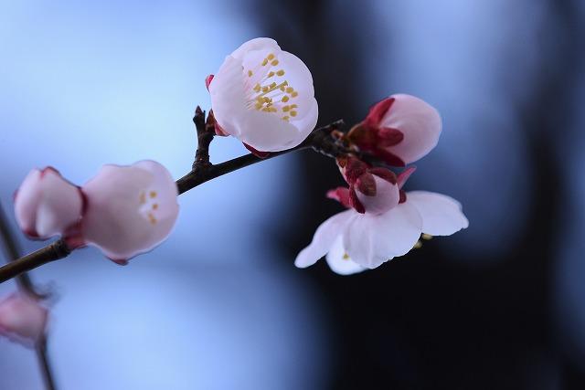 わが家の花3