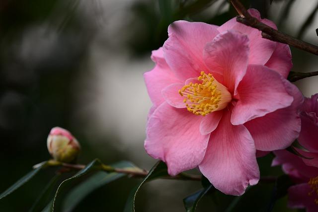 わが家の花5