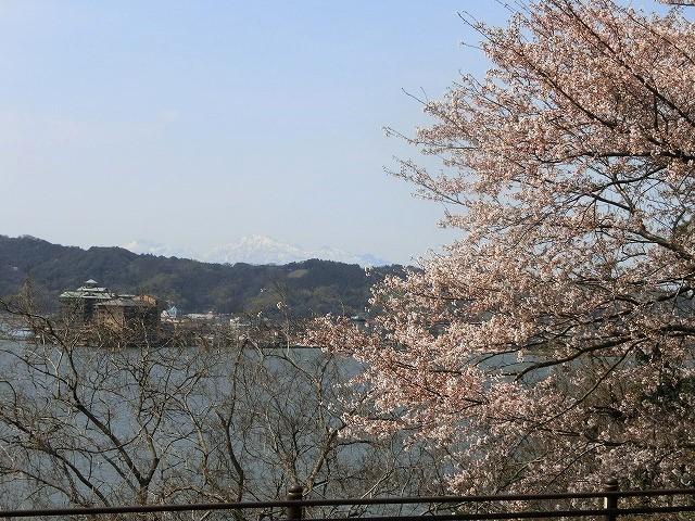 東郷湖にある羽合温泉と裏大山を望む桜1
