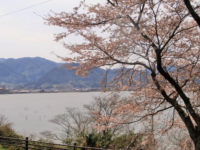 東郷湖にある羽合温泉と裏大山を望む桜2