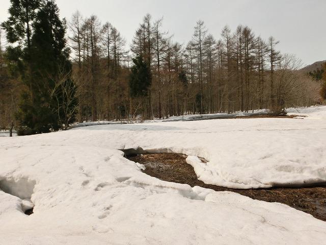 森林公園7
