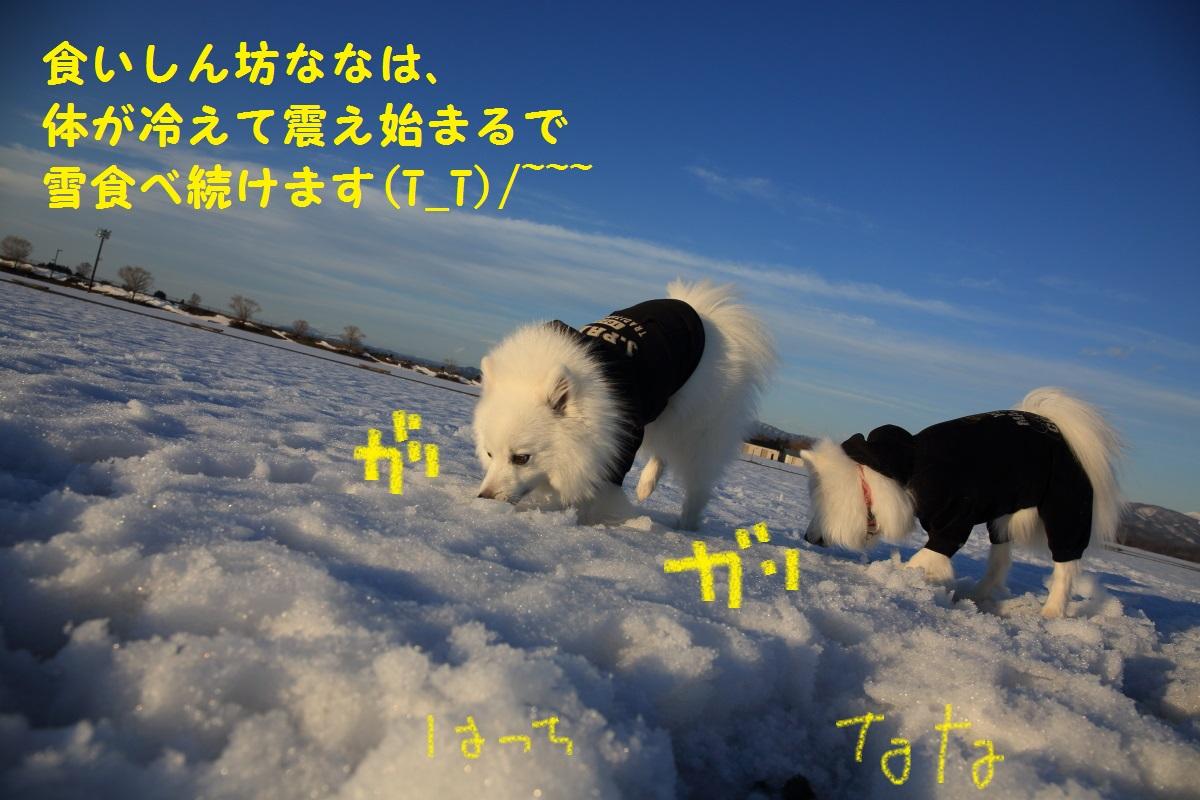 12_20140324213533bee.jpg