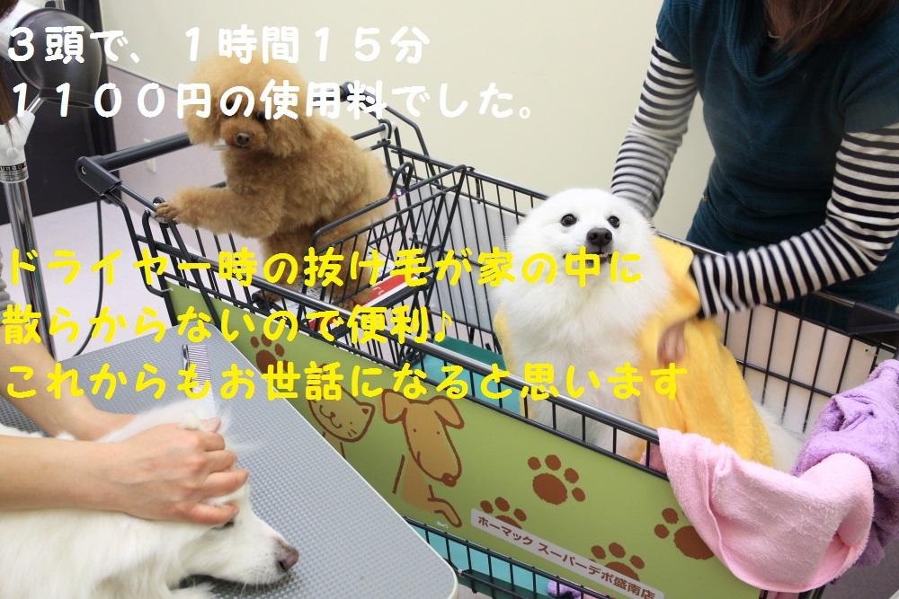 12_2014040612201238d.jpg