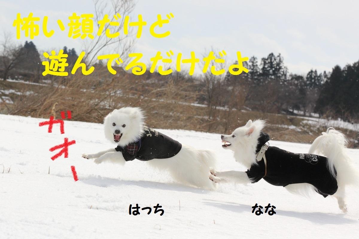 1_201402261954595c1.jpg