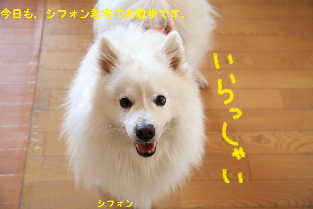 1_20140331212404f46.jpg