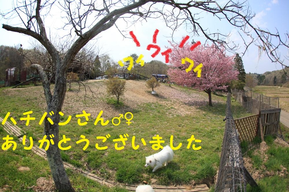 8_20140428212347c9d.jpg