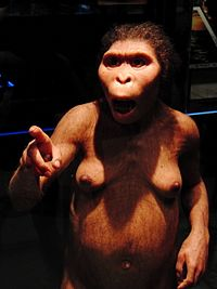 200px-Lucy_Australopithecus_Restoration_model.jpg