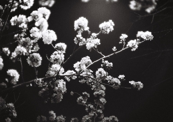 201403_sakuranoe2.jpg