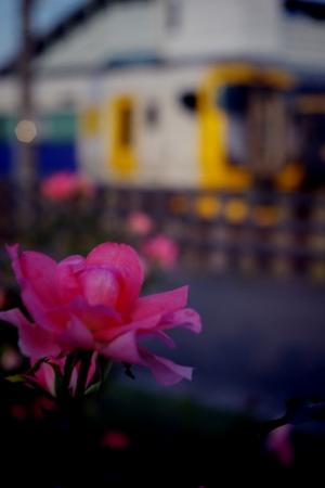 安房鴨川駅 E257系