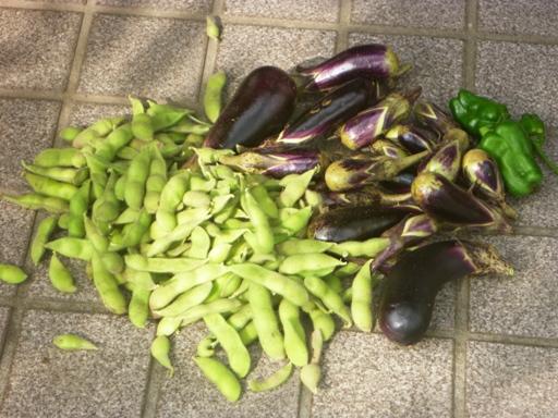 夏野菜最後の収穫