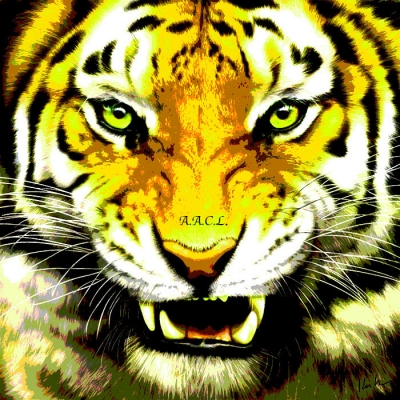 AACLYellow tiger2