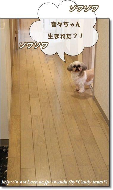 看板犬:ちぃ保母さん
