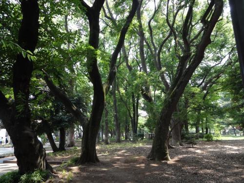 上野の森_convert