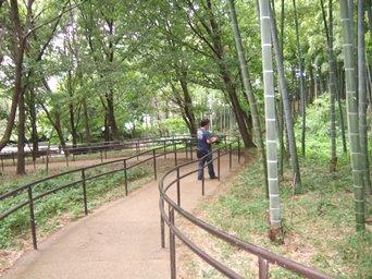 8/24 竹林のスロープ  大塚・歳勝土遺跡公園