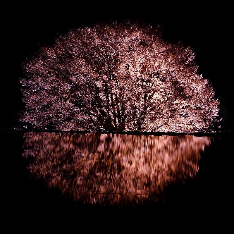 sakura_6925.jpg