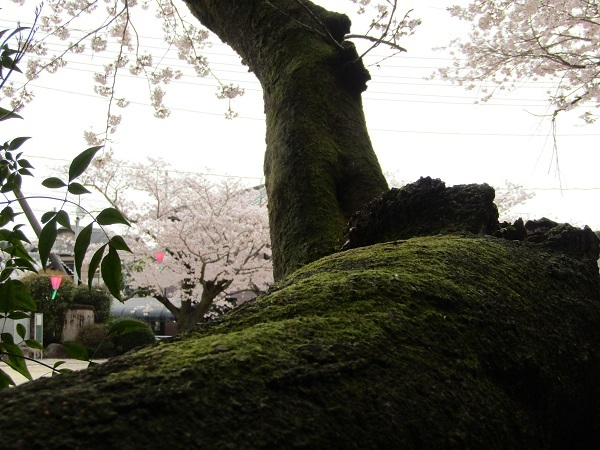 IMG_3078.jpg