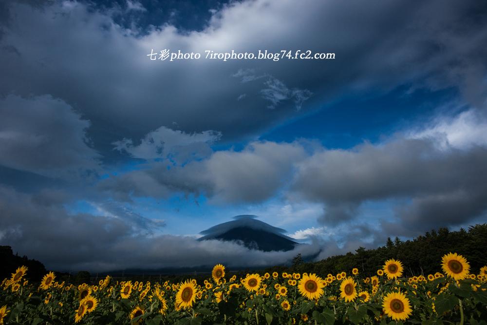 2014-08-23_huji_0071_edited-1.jpg
