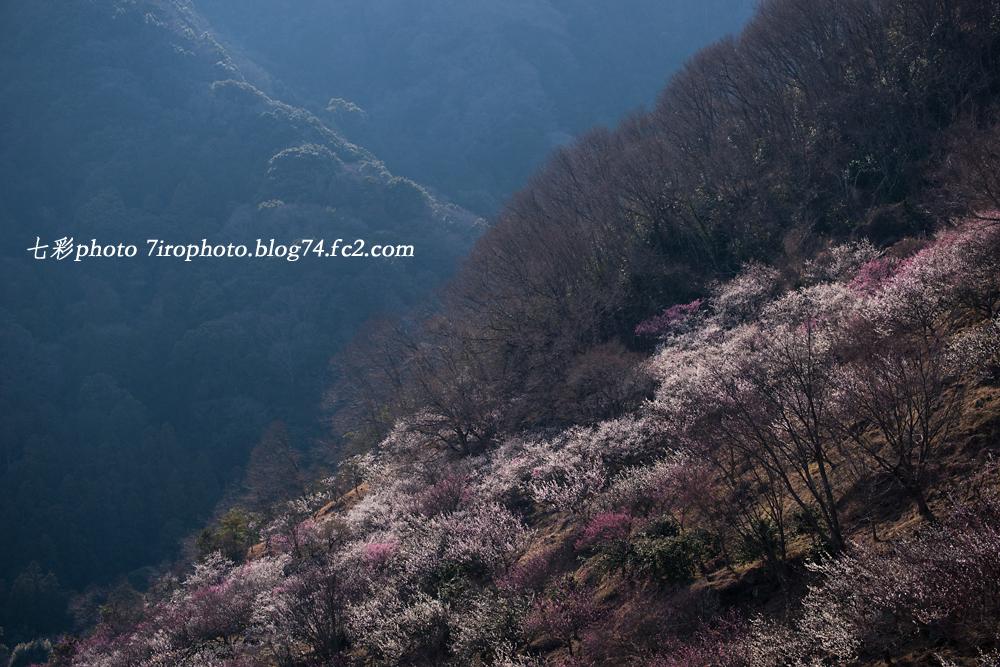 2014-03-08_湯河原梅林_1533