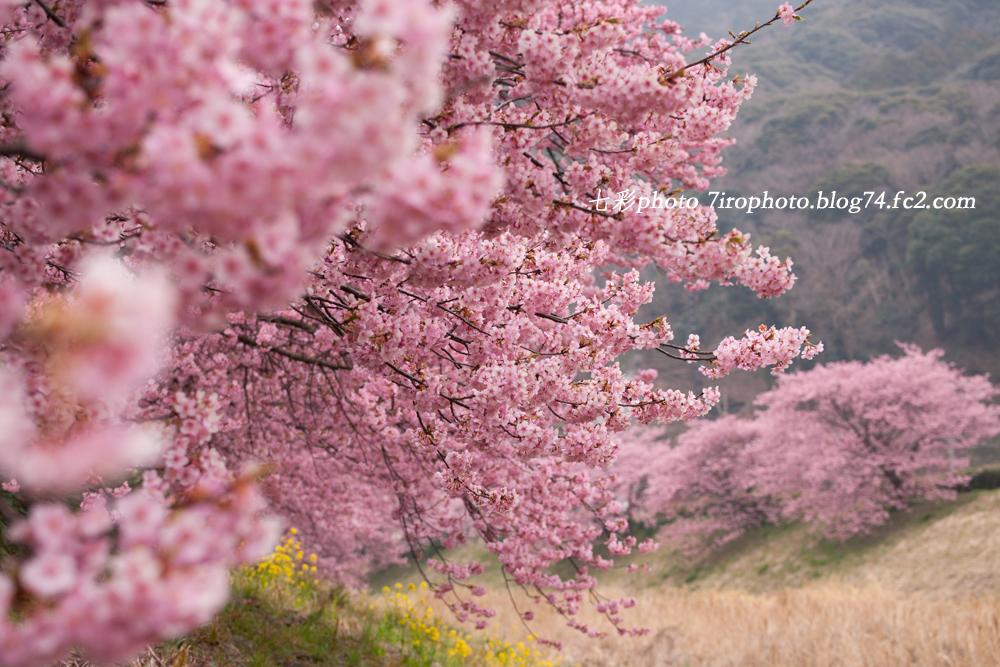 2014-03-01_南伊豆_1377_edited-1