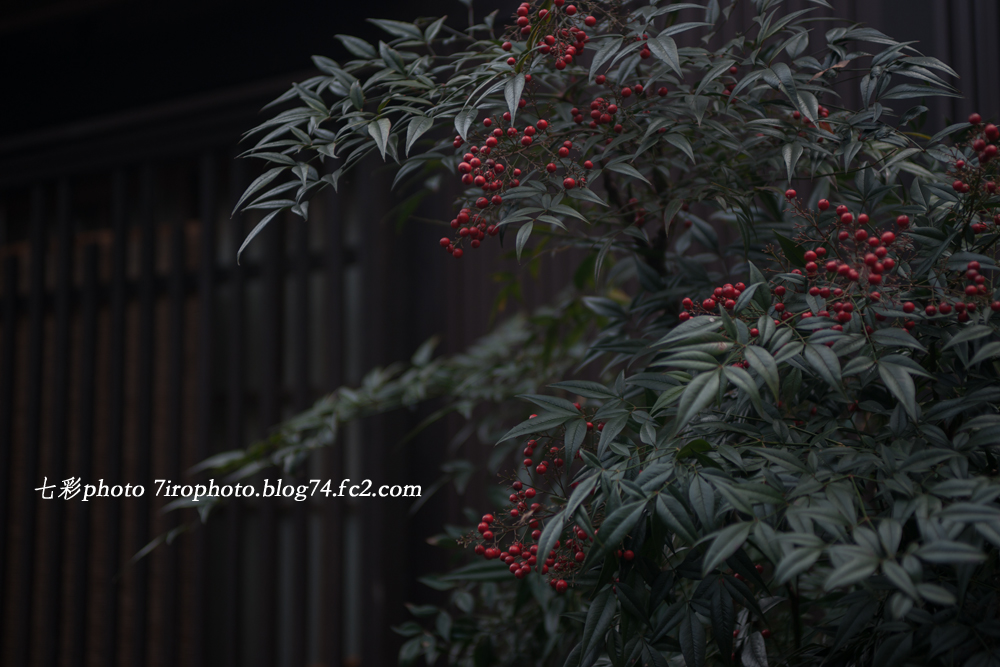 2014-03-29_郡上_1859_edited-1
