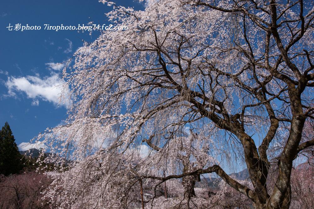 2014-04-05_清雲寺_0027