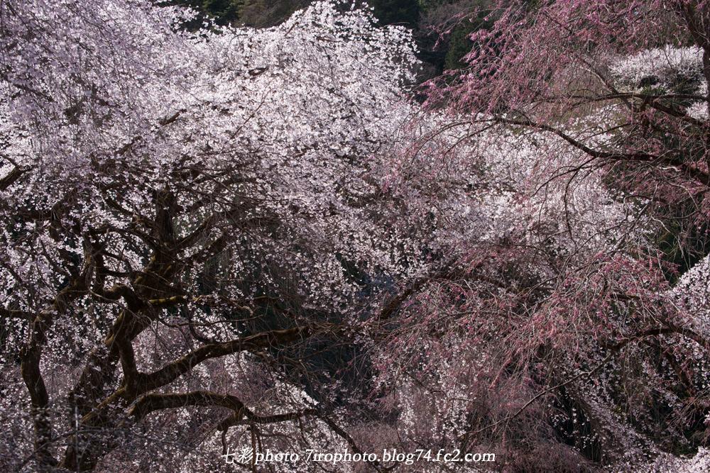 2014-04-05_清雲寺_0033