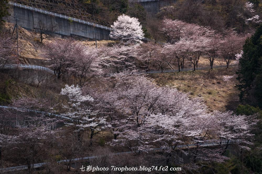 2014-04-05_清雲寺_0042