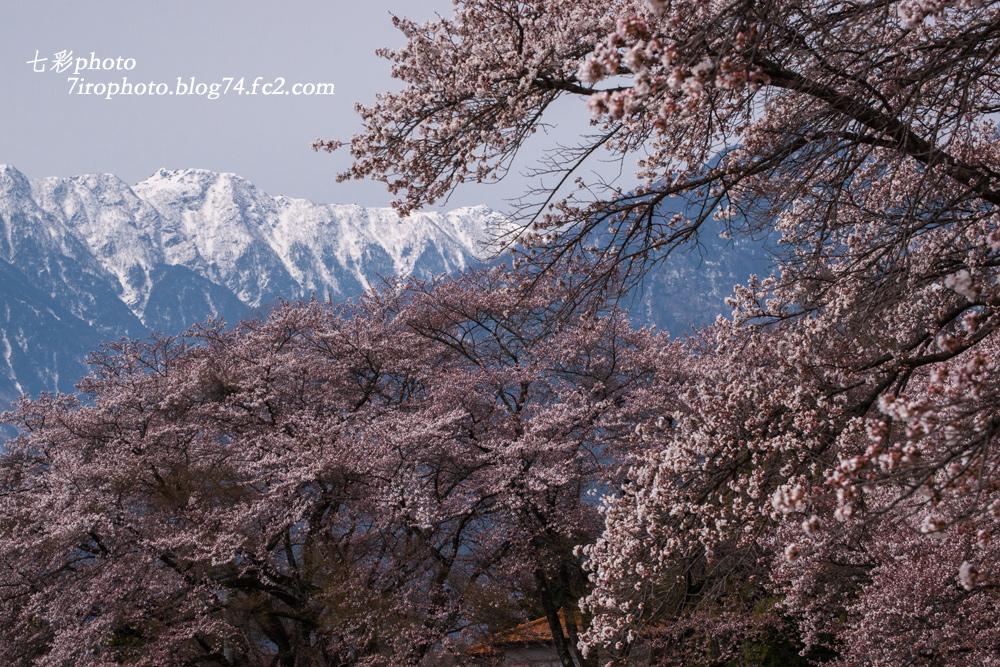 2014-04-13_山梨桃桜_0019
