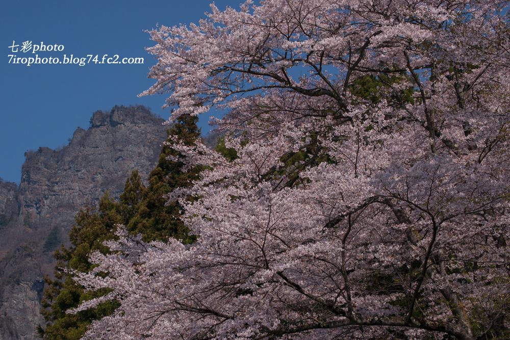 2014-04-19_妙義桜_0036_edited-1