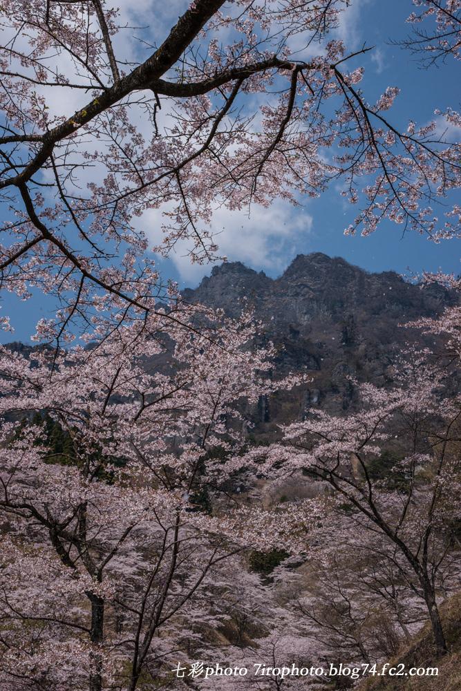 2014-04-19_妙義桜_0097_edited-1