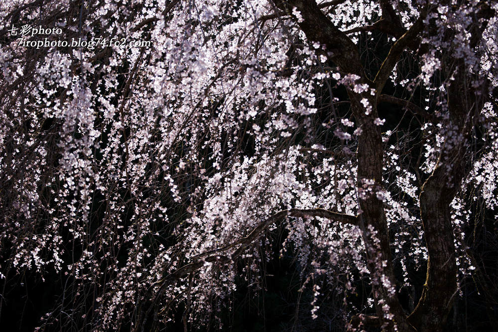 2014-04-05_清雲寺_0016