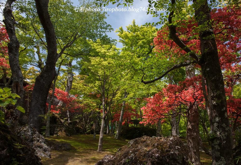 2014-05-19_箱根美術館_0051_edited-1