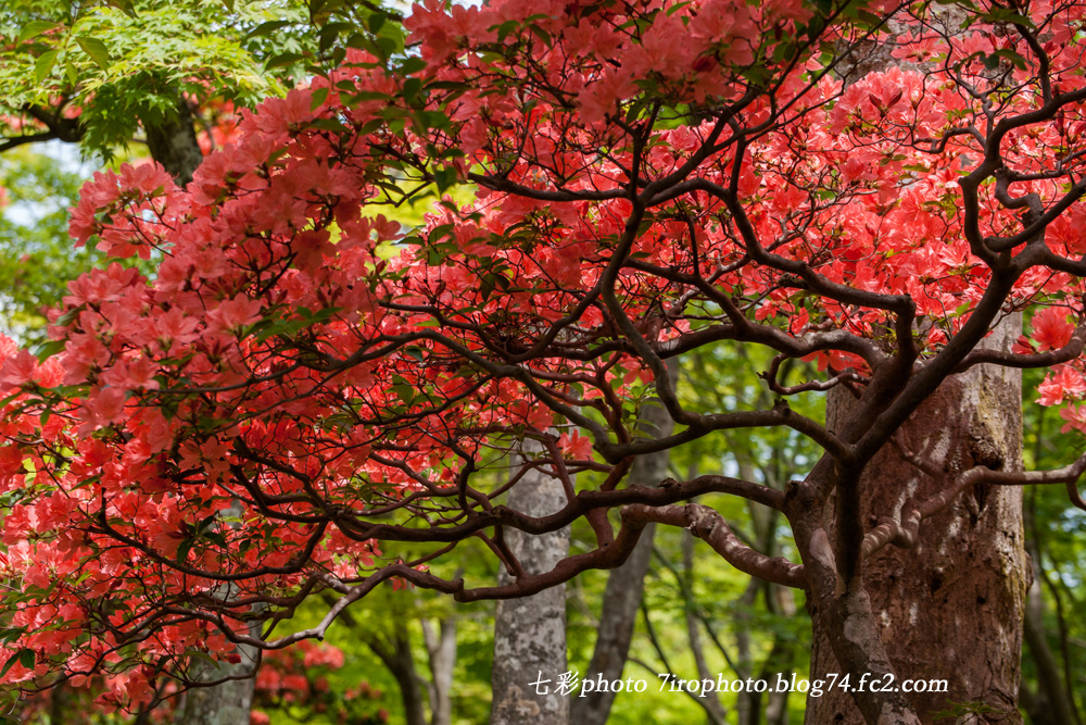 2014-05-19_箱根美術館_0015_edited-1