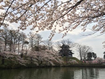 2014-04-10桜1