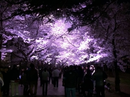 2014-04-14さくらロード