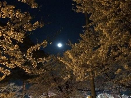 2014-04-14花と月