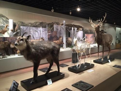 2014-05-25大町山岳美術館展示