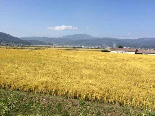 2014-09-28田んぼが広がる
