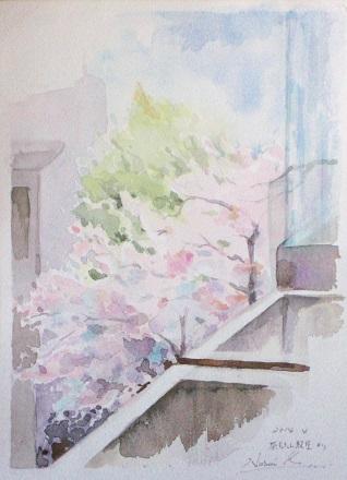 教室からの桜