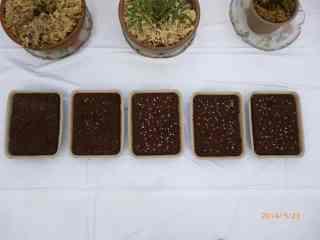 s-P1060790種植え