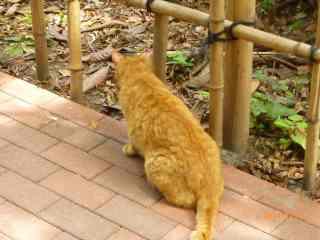s-P1060820池袋の森の地域猫