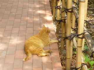 s-P1060823地域猫